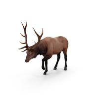 Elk PNG & PSD Images