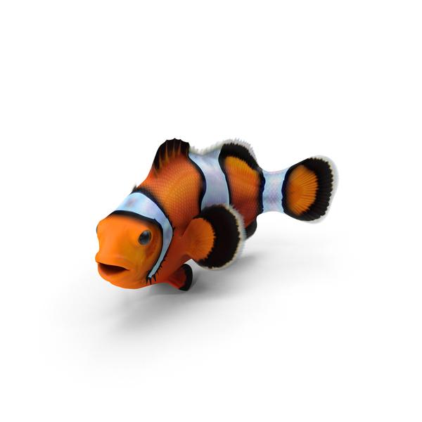 Clownfish Object