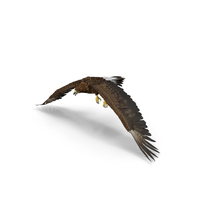 Golden Eagle Flapping PNG & PSD Images