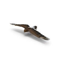 Golden Eagle Turning PNG & PSD Images