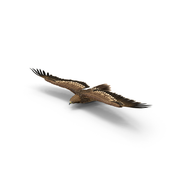 Imperial Eagle Gliding Object