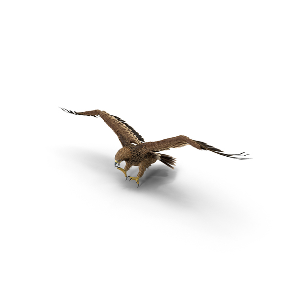 Imperial Eagle Attacking Object