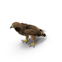 Imperial Eagle Standing PNG & PSD Images