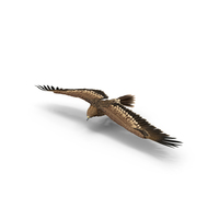 Imperial Eagle Turning PNG & PSD Images