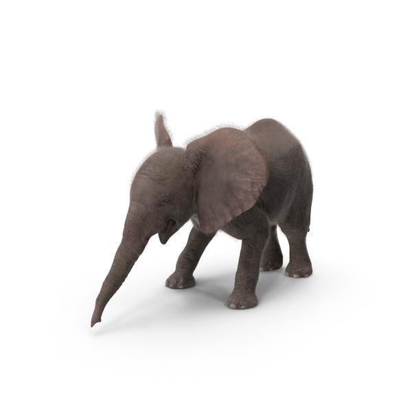 Baby Elephant Object