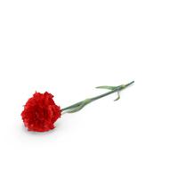 Carnation PNG & PSD Images