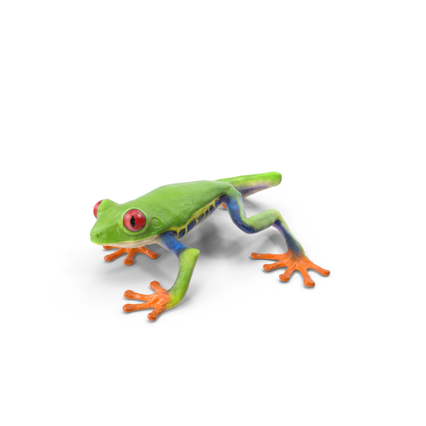 Red Eyed Tree Frog Object