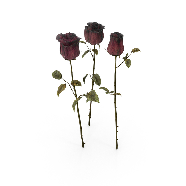 Dried Roses PNG & PSD Images