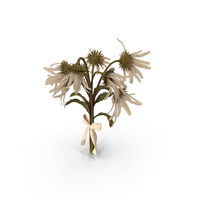 Withered Daisy Bouquet PNG & PSD Images