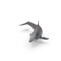 Dolphin PNG & PSD Images