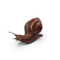 Snail PNG & PSD Images