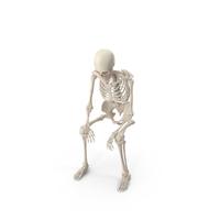 Skeleton Sitting PNG & PSD Images