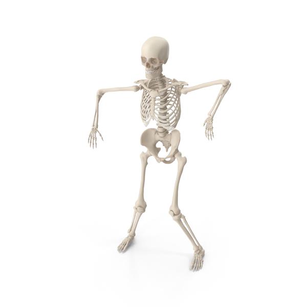 Skeleton Robot PNG & PSD Images