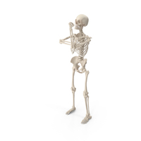 Skeleton Up Yours PNG & PSD Images