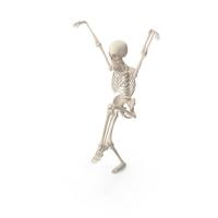 Skeleton Karate Kid Crane PNG & PSD Images
