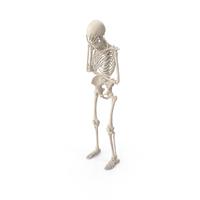 Skeleton Facepalm PNG & PSD Images