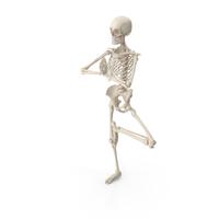 Skeleton Tree Pose PNG & PSD Images