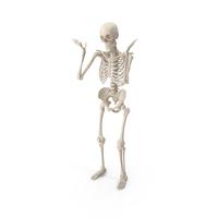 Skeleton Shrug PNG & PSD Images