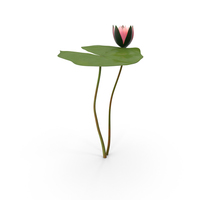 Water Lily PNG & PSD Images