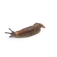 Slug PNG & PSD Images