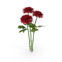 Chrysanthemum Bouquet PNG & PSD Images