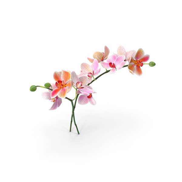 Orchid PNG & PSD Images