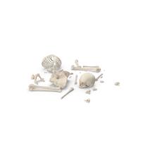 Skeleton Scattered Bones PNG & PSD Images