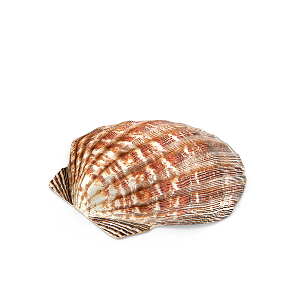 Clam Shell PNG & PSD Images