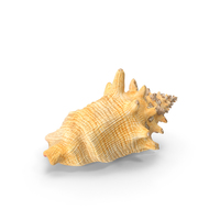 Conch Shell PNG & PSD Images