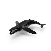 Humpback Whale PNG & PSD Images
