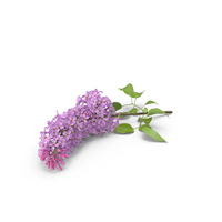 Lilac PNG & PSD Images