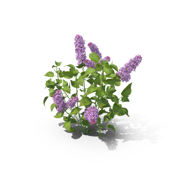 Lilac Object