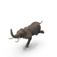 Elephant PNG & PSD Images