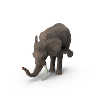 Elephant Circus Trick PNG & PSD Images