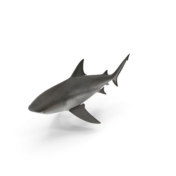Shark Object