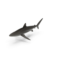 Silky Shark PNG & PSD Images