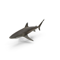 Silvertip Shark PNG & PSD Images