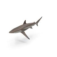 Shark PNG & PSD Images