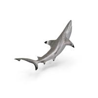 Blacktip Reef Shark PNG & PSD Images