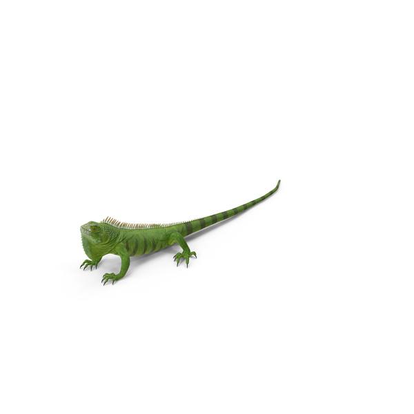 Green Iguana Object
