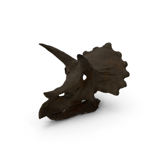Triceratops Skull PNG & PSD Images