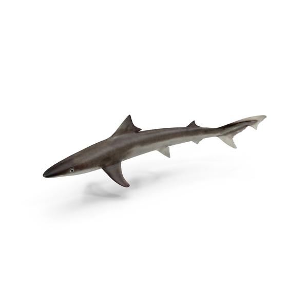 School Shark Object