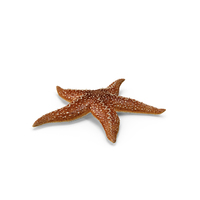 Starfish PNG & PSD Images
