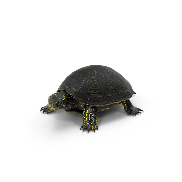 European Pond Turtle Object