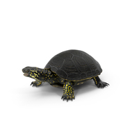 European Pond Turtle PNG & PSD Images