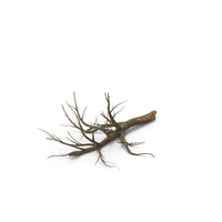 Fallen Oak Tree PNG & PSD Images