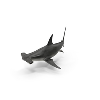 Great Hammerhead Shark PNG & PSD Images