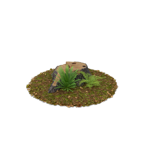 Stump with Ferns PNG & PSD Images