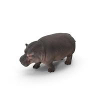 Hippopotamus PNG & PSD Images
