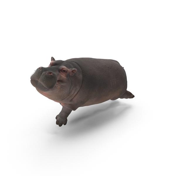 Hippopotamus Object
